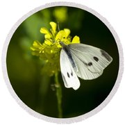 Cabbage White Butterfly On Yellow Flower Round Beach Towel
