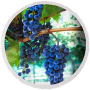 Cabernet Sauvignon Grapes Round Beach Towel by Robert Bales