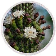 Cacti Bouquet  Round Beach Towel