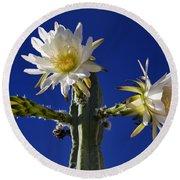 Cactus Blooms Round Beach Towel