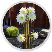 Cactus Blooms Round Beach Towel