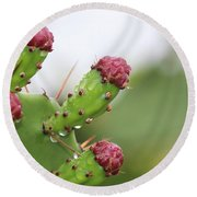 Cactus Dew 2 Round Beach Towel