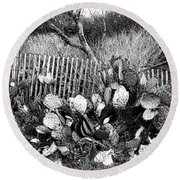 Cactus Fence- Hill Country Texas Round Beach Towel