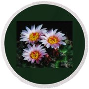 Cactus Flowers With Texture Round Beach Towel