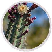 Cactus In Bloom Round Beach Towel
