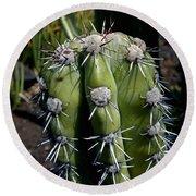 Cactus In Hawaii Round Beach Towel