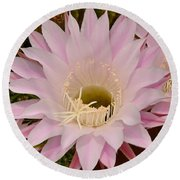 Cactus In The Backyard Round Beach Towel