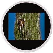 Cactus Wren With Offspring In A Saguaro Cactus In Tucson Sonoran Desert Museum-arizona Round Beach Towel