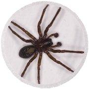Caffeine Crazed Arachnoid Round Beach Towel