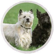 Cairn Terrier And Scottish Terrier Round Beach Towel