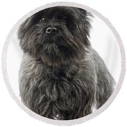 Cairn Terrier Dog Round Beach Towel