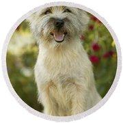 Cairn Terrier Round Beach Towel