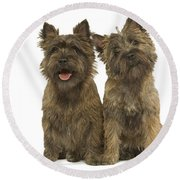 Cairn Terriers Round Beach Towel