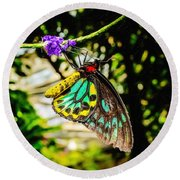 Cairns Birdwing Round Beach Towel