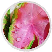 Caladium Leaf Round Beach Towel