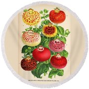 Calceolaria From A Vintage Belgian Book Of Flora. Round Beach Towel