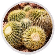 California Barrel Cactus Round Beach Towel