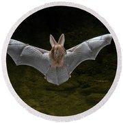 California Leaf-nosed Bat Round Beach Towel