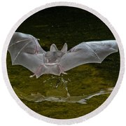 California Leaf-nosed Bat At Pond Round Beach Towel