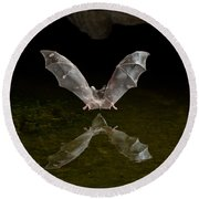 California Long-nosed Bat Flying Away Round Beach Towel