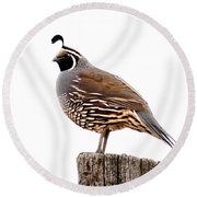California Quail Round Beach Towel