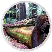 California Redwoods 2 Round Beach Towel