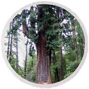 California Redwoods 6 Round Beach Towel
