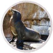 California Sea Lion Round Beach Towel