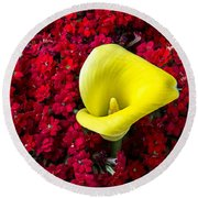 Calla Lily In Red Kalanchoe Round Beach Towel