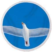 Calling Herring Gull Flying In Blue Sky Round Beach Towel
