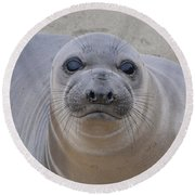 Cambria Baby Seal Round Beach Towel