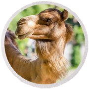 Camel Portrait Round Beach Towel