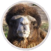 Camel Face Round Beach Towel