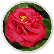 Camellia Japonica ' Dixie Knight ' Round Beach Towel