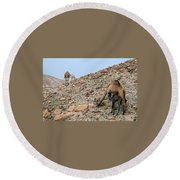 Camels At The Israel Desert -1 Round Beach Towel