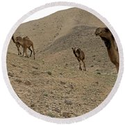 Camels At The Israel Desert -2 Round Beach Towel