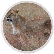 Camouflaged Female Lion In Grass Round Beach Towel