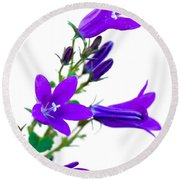 Campanula Flowers Round Beach Towel