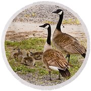 Canada Geese And Goslings Round Beach Towel