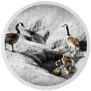 Canada Geese Family Round Beach Towel