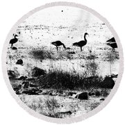 Canada Geese In Black And White Round Beach Towel