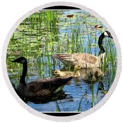 Canada Geese On Lily Pond At Reinstein Woods Round Beach Towel