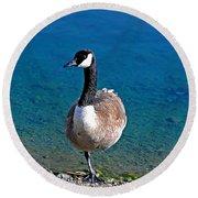Canada Goose On One Leg Round Beach Towel by Susan Wiedmann