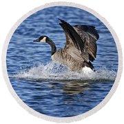 Canada Goose Pictures 111 Round Beach Towel