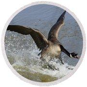 Canada Goose Touchdown Round Beach Towel
