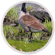 Canada Goose With Young Round Beach Towel
