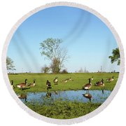 Canadian Geese Community In West Haven Round Beach Towel