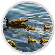 Canadian Goose And Goslings Round Beach Towel