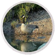 Canadian Goose Reflection Round Beach Towel