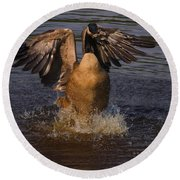 Canadian Goose Smooth Landing Round Beach Towel